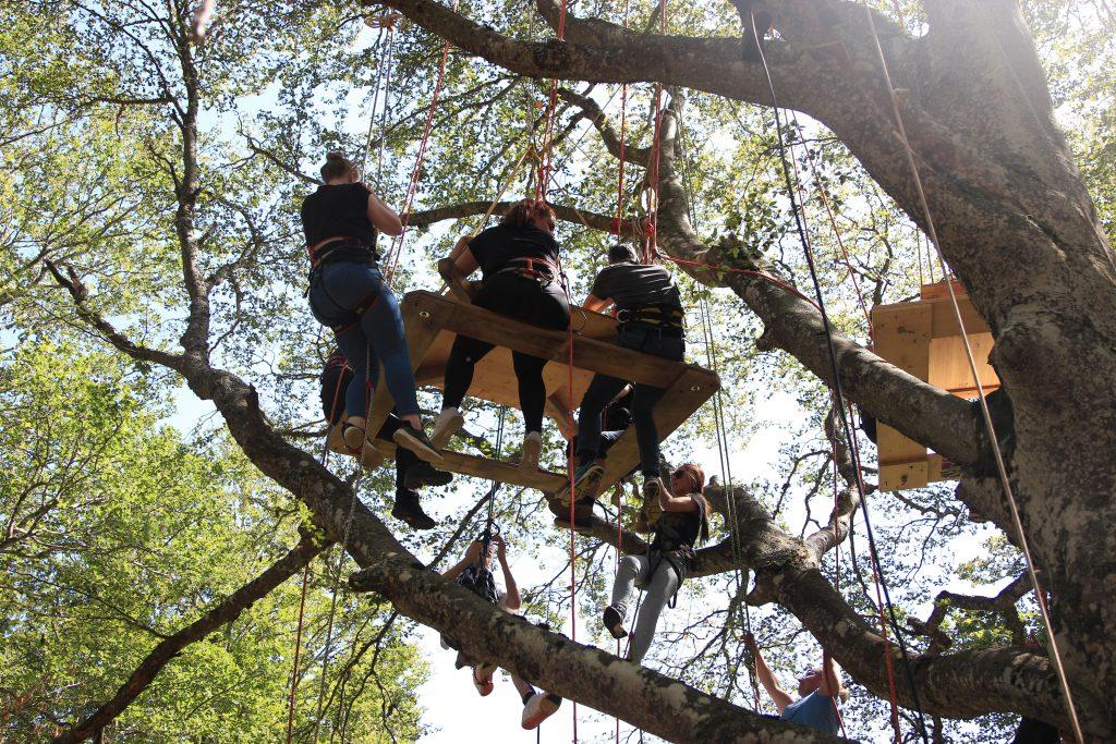 Activité de team building en foret