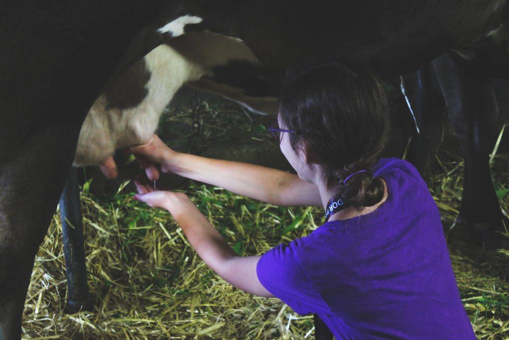 traite vache classe verte